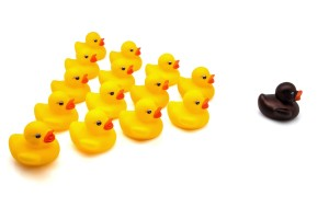 Squadron of rubber ducks